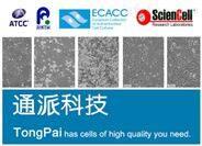 Hepa 1-6细胞 Hepa 1-6细胞价格