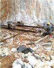 丽水矿山用膨胀剂建筑爆破